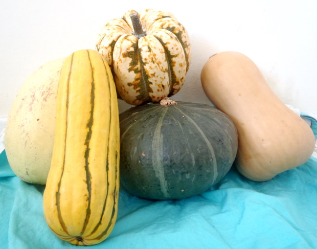 Delicious squash bounty! Can you tell which is which?
