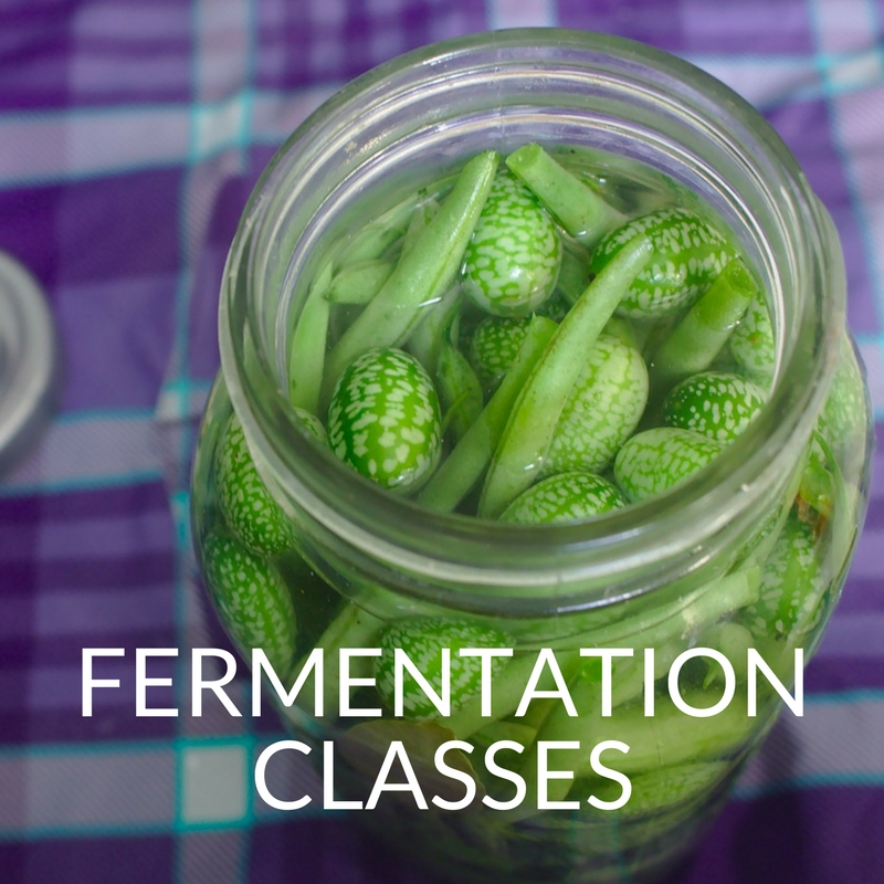 learn how to ferment with caitlin iles
